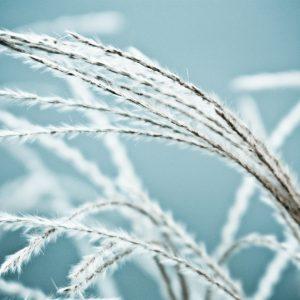 1031 Summer Grass