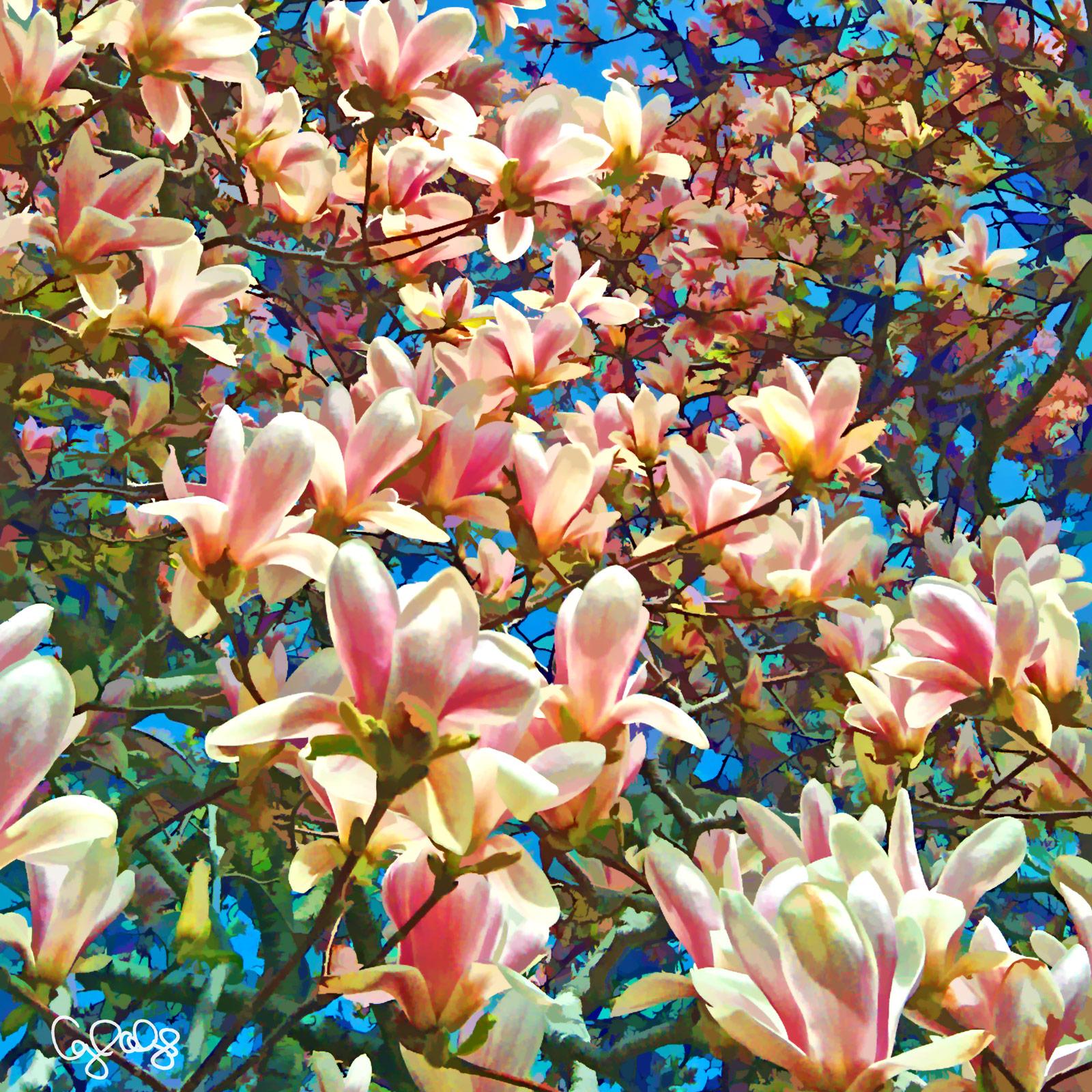 1064 Magnolia