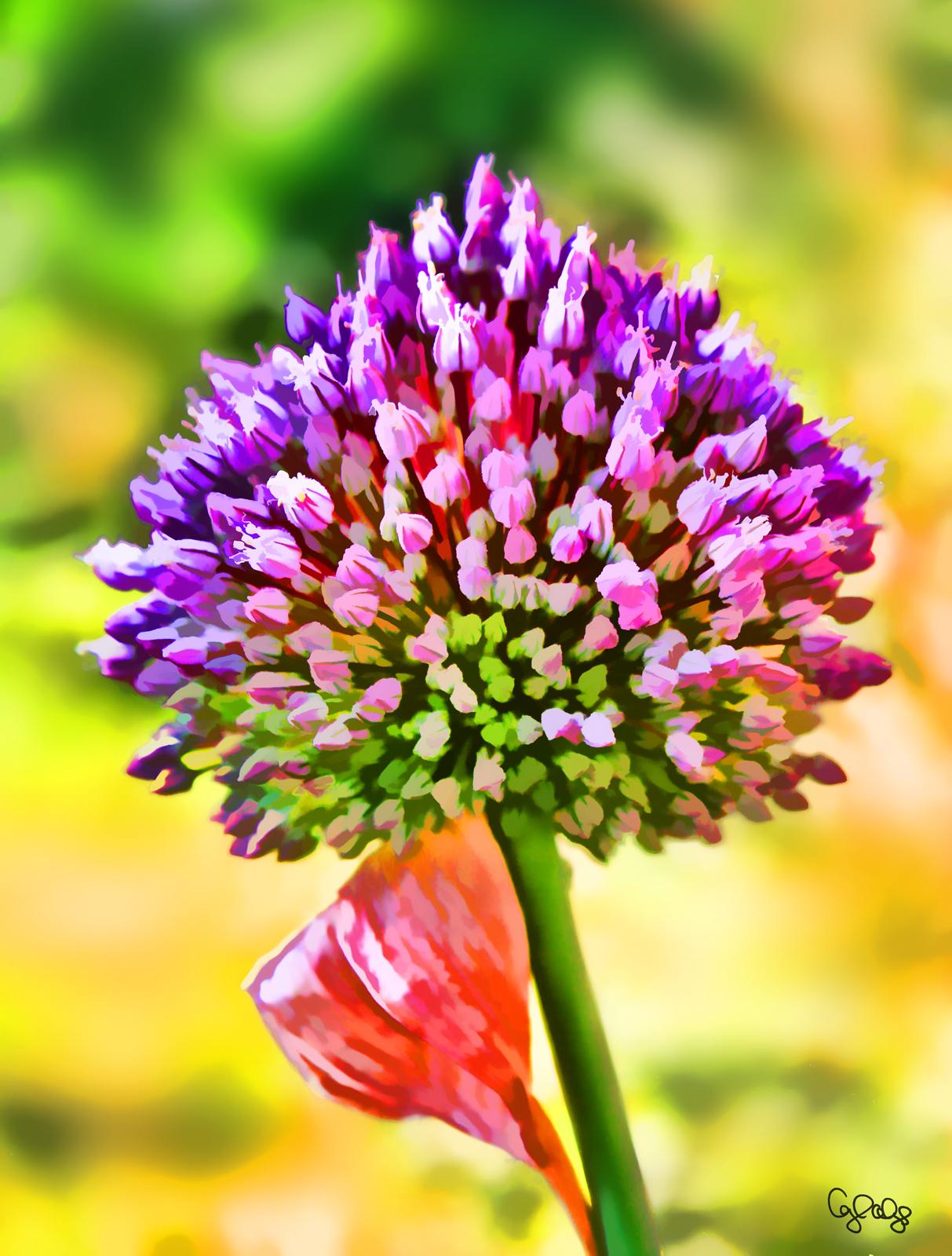 1069 Allium