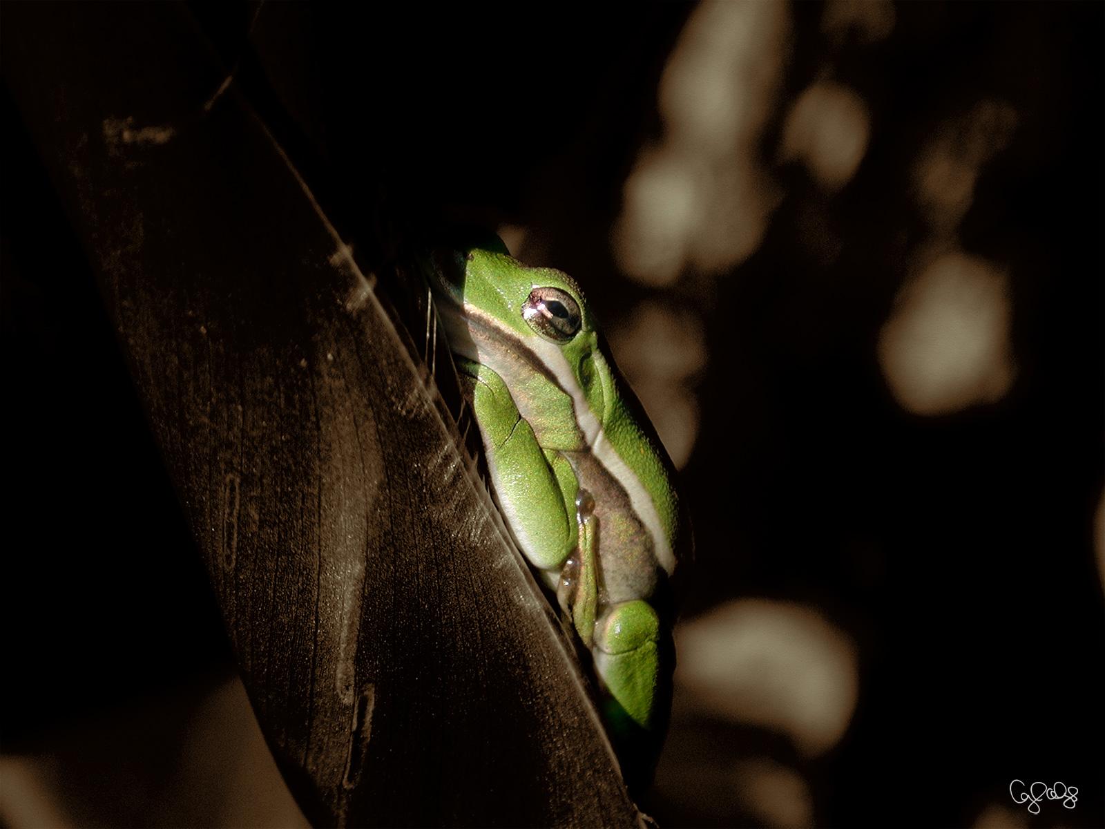 1094 Frog