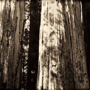 2006 Redwoods