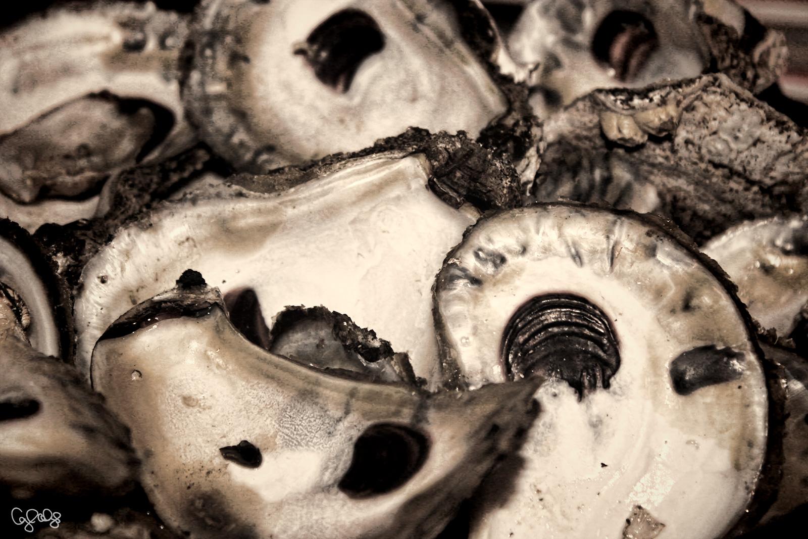 2011 Oyster Shells