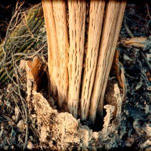 2025 Saguaro
