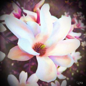 2123 Magnolia